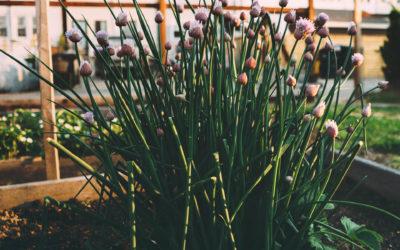 Mieszkanie z ogródkiem – na co patrzeć przed zakupem?
